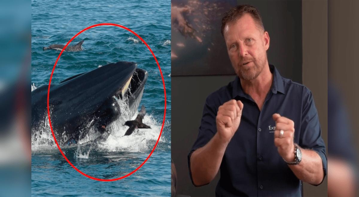 Ballena se traga a un buzo y luego lo expulsa vivo en una playa de  Sudáfrica| Youtube| viral | Aweita La República