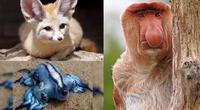 14 animales que debieron ser un Pokémon