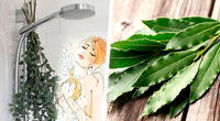¿Por qué se están colocando eucalipto en las duchas de todos? Mira la impresionante razón