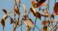 ¿Puedes encontrar al pájaro de la foto? El reto que se volvió viral