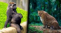 Ellas muestran el lado más dulce de la naturaleza y el mundo animal que debemos proteger.