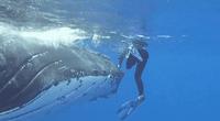 El inmenso animal le dio una segunda oportunidad de vida.
