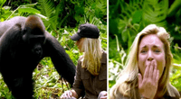 Gorilas percibieron la buena intención de humanos.