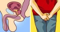 La próstata funciona como una vejiga secundaria que ejerce presión para que el semen sea expulsado a través de la uretra.