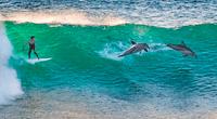 La cabeza de los delfines contiene el melón, un órgano redondo usado para la ecolocalización.