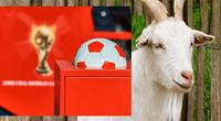 La cabra fue escogida para pronosticar el resultado de los partidos de Rusia 2018