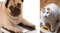 Las mascotas también pueden padecer de obesidad, según los especialistas