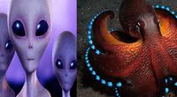 Una reciente investigación asegura que los pulpos son extraterrestres