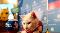 El gato Aquiles pronosticó el ganador del partido entre Rusia y Arabia Saudita