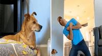 Dueño terminó decepcionado por las acciones de sus mascotas.