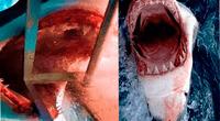 La imagen del tiburón ha sido mitificada a lo largo de la historia a través del cine u obras de teatro.