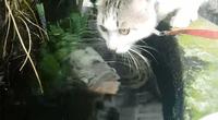 'Gatito' fue sorprendido con tierno beso de un pez.