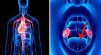 8 increíbles funciones de tu cuerpo como nunca antes las viste.