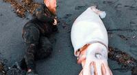 Tres hermanos hallaron un calamar de más de cuatro metros en una playa de Nueva Zelanda