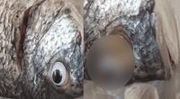 """Venden """"pescados sin cirugía estética"""": les colocan ojos falsos y los hacen pasar como frescos."""