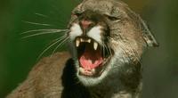 La pelea entre los animales solamente se detuvo cuando intervinieron unos rescatistas.