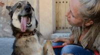 Veterinaria que tiene a cargo al perro víctima de zoofilia reveló que el can quedó con grandes secuelas