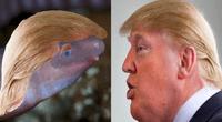 """Hallan extraña criatura y lo bautizan como Donald Trump en """"venganza""""."""