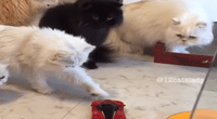 Mira cuál fue la reacción de los felinos