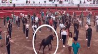 """Toro es liberado en medio de 100 personas y su reacción destierra mitos; la """"bestia"""" no atacó."""