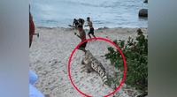 Enorme cocodrilo aparece sigilosamente en playa y turistas huyen despavoridos.