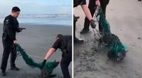Lobo marino quedo atrapado en una red de plástico