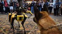 Spot, el perro robot que ya está siendo vendido a todo tipo de empresas y planea llegar a tu hogar (VIDEO)