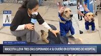 ¿Quién es FiruCo? | La historia de un perrito que espera a su dueño hospitalizado por Covid-19 en Hospital Almenara