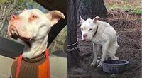 Perro pasó 4 años encadenado a un árbol hasta que lo rescataron.