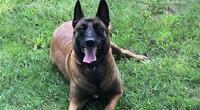 ¡Heroico! Perro alerta a vecinos que su casa se incendiaba y salva a toda una familia (VIDEO)