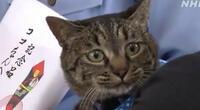 'Coco' es el gato héroe que le salvó la vida a un anciano