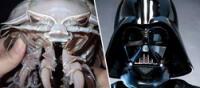 """""""Darth Vader"""", la cucaracha marina con el aspecto del villano más famoso de Star Wars (FOTOS)"""