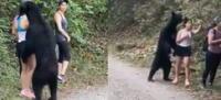 """Un oso negro salvaje """"abraza"""" a una mujer, pero esta lo ignora y hasta se toma un selfie (VIDEO)"""