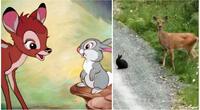Bambi y el conejo tambor.