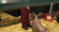 """Neuralink: Elon Musk experimenta situación incómoda por cerdo que se """"niega"""" a participar en la demostración (VIDEO)"""