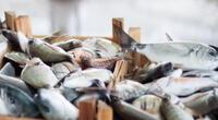 Más amigables con el medio ambiente: Científicos diseñan baterías sostenibles a partir de residuos de pescado