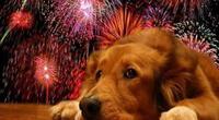 ¡Ya no sufrirán más con los fuegos artificiales! Ford presenta su nueva casa para perros con cancelación de ruido