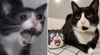 Fallece 'Inkky', la protagonista del meme de 'la gata que grita'