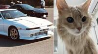 Señor vendió su auto para salvar la vida de su amado gatito, su historia conmovió a miles en redes