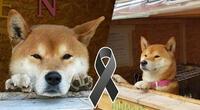 Fallece el famoso perrito que atendía un local y las redes lloran su partida
