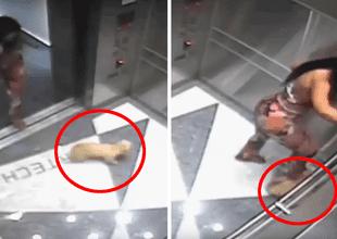 El pobre animal tomó la terrible decisión de querer esconderse en el ascensor.