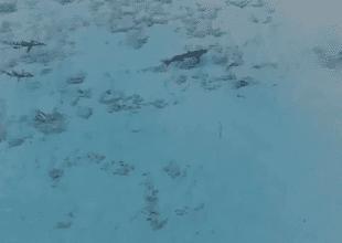 Un aficionado al manejo de dron pudo salvarle la vida.