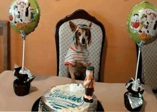 Se desconoce el nombre del can festejado, pero es un hecho que la pasó muy bien el día de su cumpleaños.