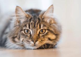 Veterinario señala que las personas suelen nombrar de forma incorrecta a sus gatos