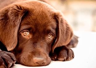 Veterinarios  señalaron que las mascotas buscan incesantemente la cara de sus dueños antes de morir
