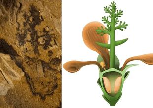 Científicos creen que se trata de la más antigua conocida hasta el momento.