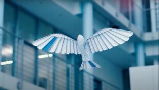 BionicSwift, el increíble pájaro robot que vuelva y hacer acrobacias aéreas como si fuera uno real (VIDEO)