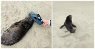 Turista golpea varias veces a un león marino bebé dormido en una playa y usuarios lo critican