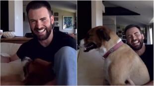 El perrito de Chris Evans interrumpe su reunión de zoom.
