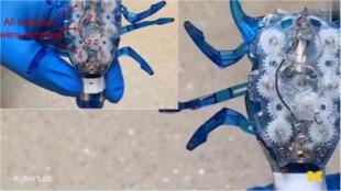 Podría brindar hasta 72 veces más energía: Conoce a las baterías biomórficas, el futuro de los robots (VIDEO)
